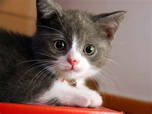 Okay your kitten is cute and cuddly. What about te name it Cuddly? o Coco? Anything would help.. between Cuddly and Coco, i think u should name it Cuddly because it looks Cuddly. It beautiful eyes, what about Sapphire?