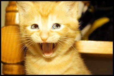 ..The only cute thing, I like are....kittens...! ..:3