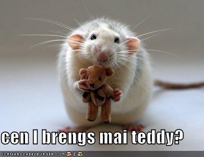 cute rat...