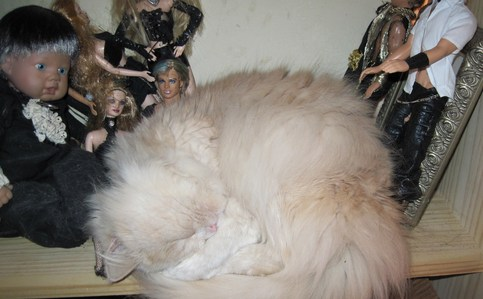 v my cat sleeping on the the shelf with my Harry Potter dolls.