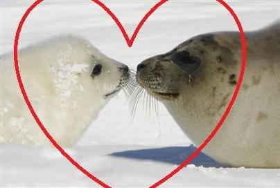 i l'amour seals do toi l'amour as much as i do