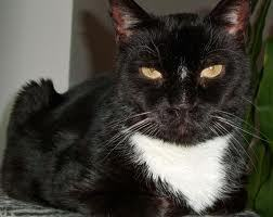 Do आप have a pet named after someone in the HP universe? This is Severus Cat.