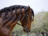 Post your favorit picture of a horse!!!!