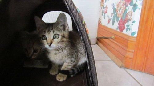 Do wewe like my cats?!