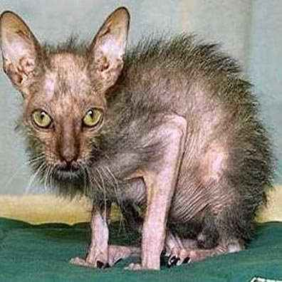 Post a pic of the ugliest animal