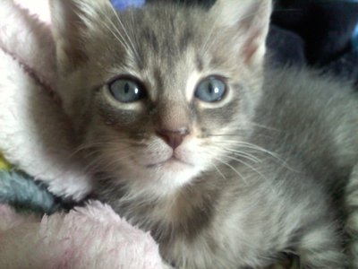 Help Me Name My New Kitten !!! (Picture Included) (;