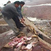 DOG KILL