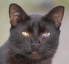 """""""i'm know looking at a black cat"""""""