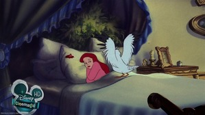 Scuttle waking up Ariel