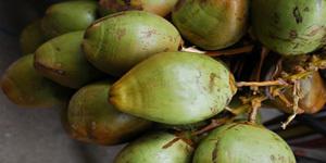 extremely versatile fruit/nut