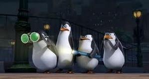 The penguins investigate.