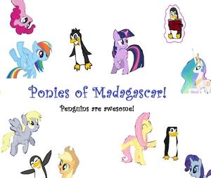 Ponies of Madagscar!