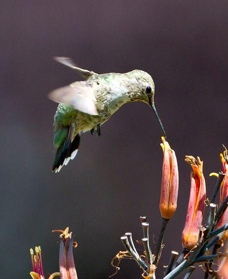 Hummingbirds, too!