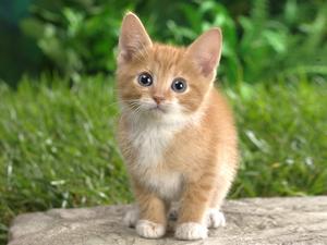 My terrifying enemy, Cat.