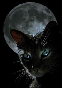 Black Cat Moon