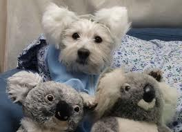 Koalas Bears and My Friends Dog.