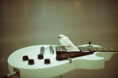 white guitar... & birdie :)