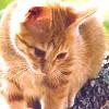 5. Feline (Milo from Milo & Otis)