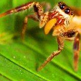 Round 11  1. Insect/Arachnid