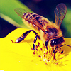 1. Insect/Arachnid
