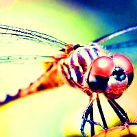 Round 11 ~  1. Insect {Dragonfly}