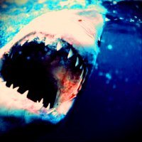 9. Sharp {Sharp shark!}