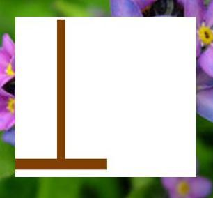 <b><u>NO! R is incorrect.</b></u>  <b>Round 16: </b> Category: Plants [2 words 12 letters]  <b>===