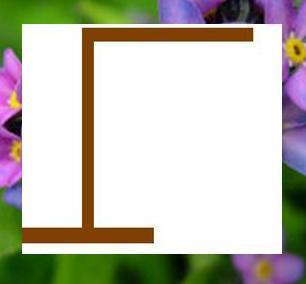 <b><u>NO! C is incorrect.</b></u>  <b>Round 16: </b> Category: Plants [2 words 12 letters]  <b>===