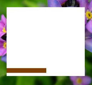 <b><u>A? NO!</b></u> <b>Round 25:</b> Category: Plants [1 word, 6 letters] <b>=== l O === =