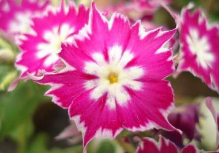 <b><u>YES!</b></u><br />