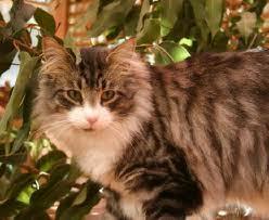 Cat Name:Mossfur Gender:She-Cat :3