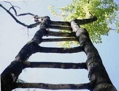 i climb up a boom (it looks like this this is a actual tree) beautiful what nurture can do i say