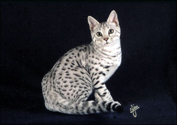 i am claw. i have white fur with black spots and blue eyes. i'm a warrior. i was a at created at the