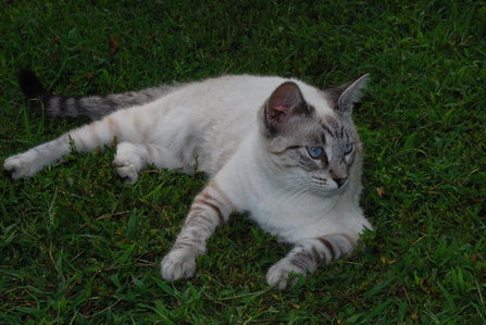 Fleetfoot- A longlegged cream-white she-cat with tabby legs, head and tail, with ice blue eyes.<br />