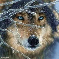OK ill do mine now!! XD Name:Tresa Rank: Alpha female and Caretaker (Takes care of the pups) Age
