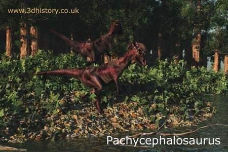 P-PACHYCEPHALOSAURUS