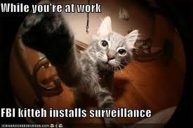 LOL kitteh by far!