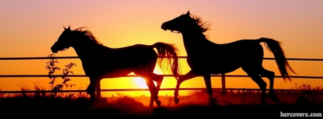 Read mais about it at this site I found http://www.hercovers.com, over 30 cavalos for your facebook ti