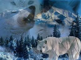 Arctic loups