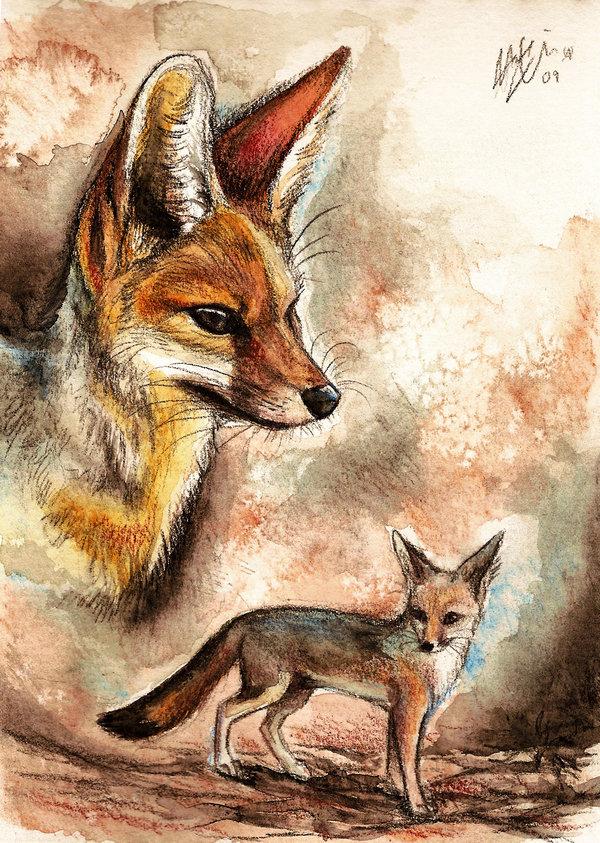 Cute Fox - Fox Fan Art (24572685) - Fanpop