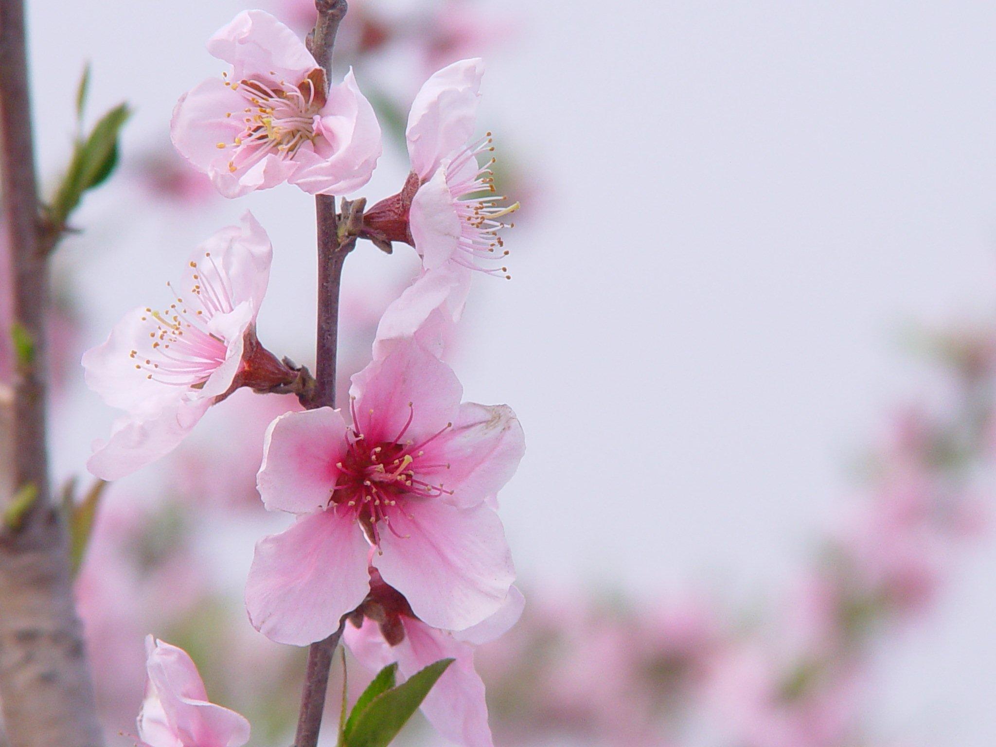 Flowers karatasi la kupamba ukuta