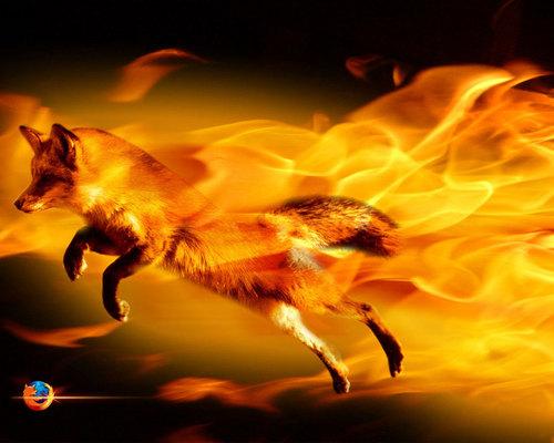 zorro, fox fondo de pantalla