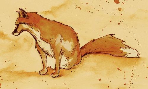 zorro, fox :)