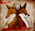 Foxes :)