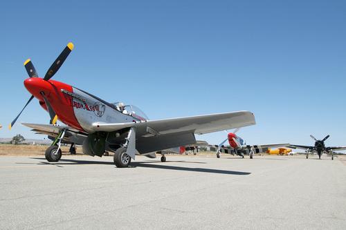 North American P-51 giống ngựa rừng ở mể tây cơ, mustang