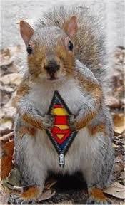 super गिलहरी