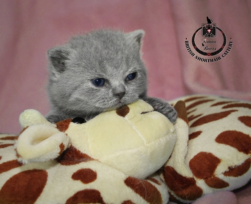 ^_^ cats