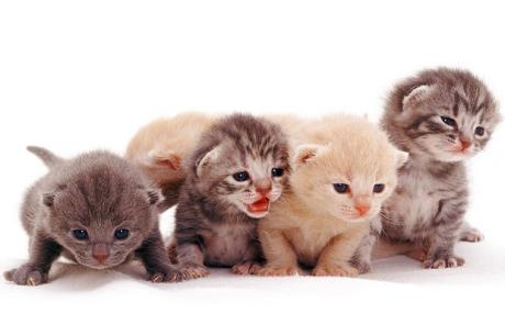 ^_^ cats