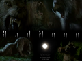 horror-movies - Bad Moon Werewolf wallpaper
