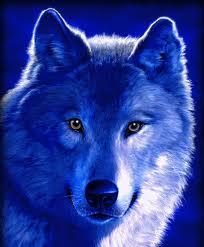 Blue lobo
